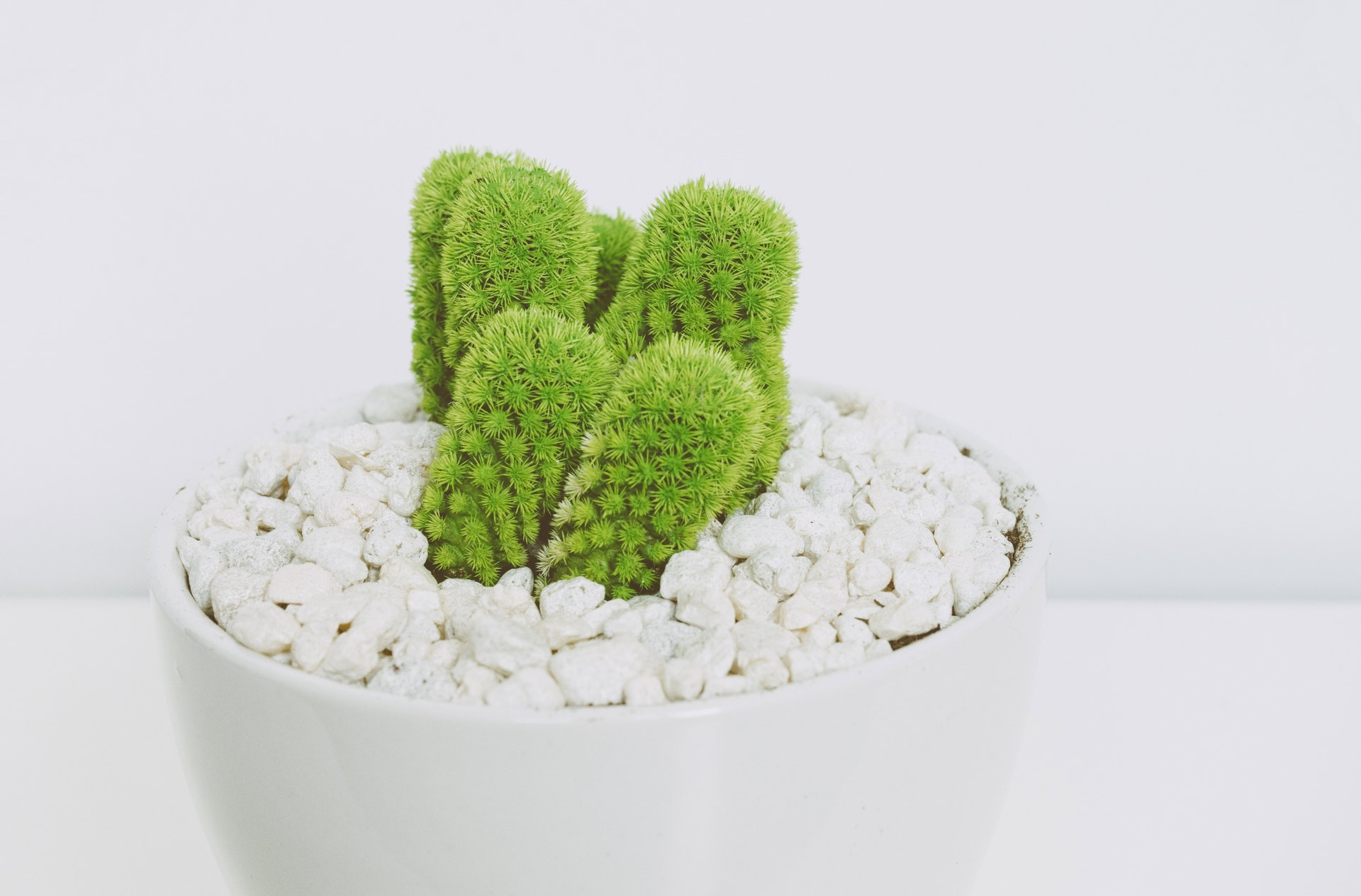 DIY FELT CRAFT: POP CACTUS